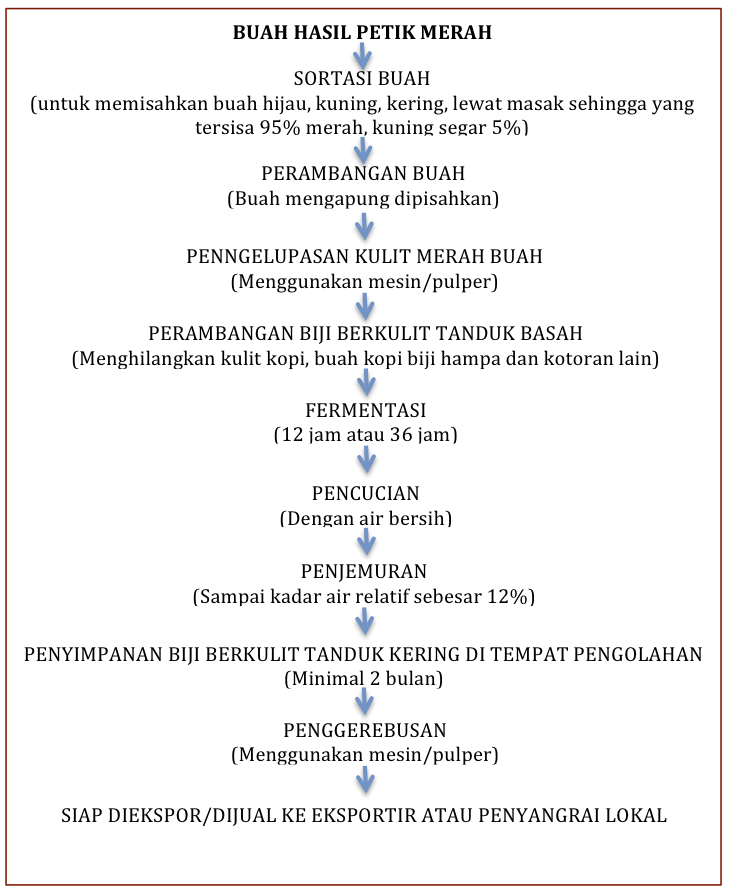 Peluang usaha kopi kintamani baliedu tours and travel 6281353187669 proses pengolahan kopi ccuart Gallery